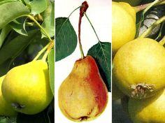 Ízes nevek, ízletes gyümölcsök.