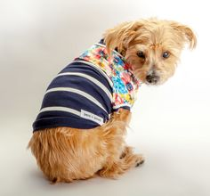 DOG & CO.   Penny in the PENN + POOCH Babe TShirt