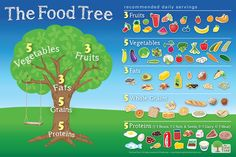 The Food Tree Guide to Holistic Nutrition