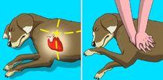 6 lépés, amivel megmentheted egy kutya életét