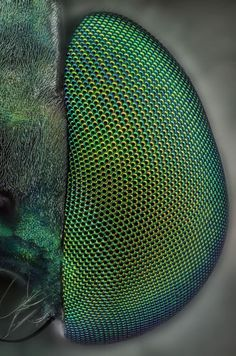 MicroPicx: Green eyes. A macro shot of a bug's eye.
