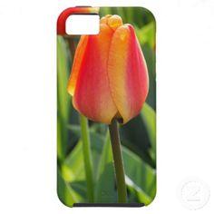 Beautiful Orange Tulip Photo iPhone5 Case