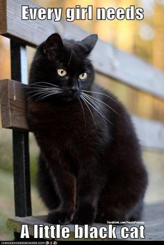 every girl needs a little black cat      =^..^= I miss my first cat who was all black with green eyes