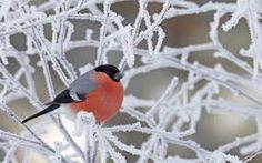 vogels 1600x900 - Google zoeken