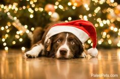 Click LIKE if you Love Dogs #PaleoPets It isn't christmas yet, but this #dog is so #cute http://www.cutestpaw.com/images/christmas-5/