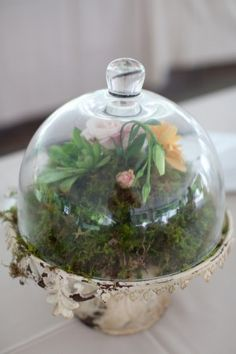 I dont know why ...  why but terrariums remind me of Victorian era when people kept green houses with delicate  plants