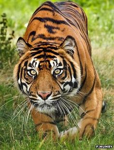 Let's hope we don't lose these in the wild. Awesome animal.