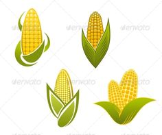 Yellow Corn Icons and Symbols  #GraphicRiver         Yellow corn icons and symbols for agriculture design. Editable EPS8 and JPEG (can edit in any vector and graphic editor) files are included                     Created: 4 December 13                    Graphics Files Included:   JPG Image #Vector EPS                   Layered:   No                   Minimum Adobe CS Version:   CS             Tags      agriculture #background #cereal #close-up #cob #color #corn #crop #food #freshness #gold…