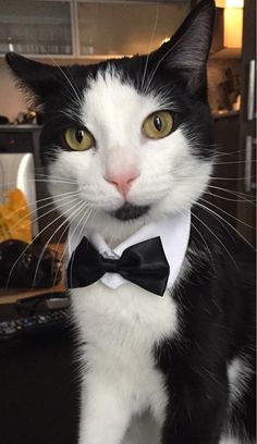 Image result for animals dressed up tux and tiara
