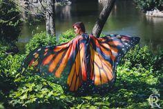 Image of Monarch butterfly long wings