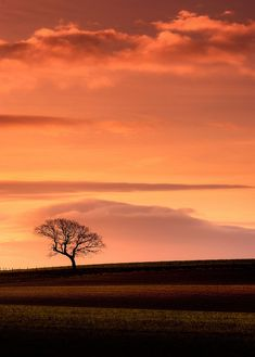 ♂ Amazing photography lonely nature #nature #tree