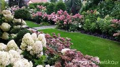 Wizytówka-Hortensjada - Forum ogrodnicze - Ogrodowisko