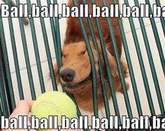 ball ball ball ball