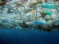Plastic debris is having a devastating effect on the world's oceans and its marine life...Today, one million single-use plastic bags are used every minute (that's 60 million an hour, more than a billion per day). Considered throw-away items, most are used for a matter of minutes and many subsequently find their way into our oceans, where plastic debris is killing thousands of marine animals.  Join us (EIA) in going bag-free for life!
