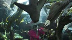 A professional diver is killed by a stingray while removing fish from the closed Underwater World oceanarium in Singapore. Stingray Fish, Image Caption, Underwater World, Sea Creatures, A Team, Singapore, Plant Leaves, Attraction, Bbc News