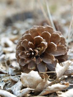 Pine Cone & Dry Leaves / Browns & Grays