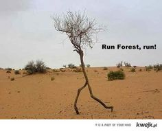 You don't see many Forrest Gump jokes these days