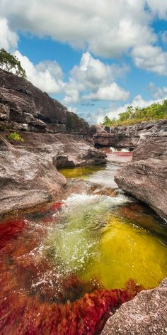 "The River of Five Colors""Caño Cristales River, Meta, Colombia"