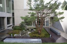 marc kean's tiger glen / A wide shot of the courtyard garden. The Japanese red pine shows off its well-pruned and maintained structure. The wooden walkways are made from Ipe.