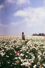 Resultado de imagen para flores tumblr vintage