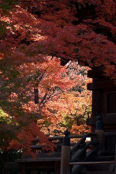 shinyno-dou #japan #kyoto
