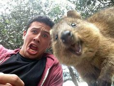 Meet the Quokka, the happiest animal on Earth. These are the CUTEST photos you'll see all day!