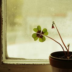 Trebol 4 hojas suerte. 4 Leaves, Green Tips, Little Plants, Small Trees, Good Luck, St Patricks Day, Incense, Green Colors, Grass