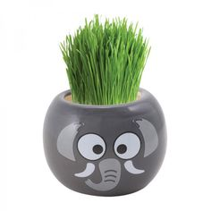 Animal grassheads - a different but fun stocking filler for kids