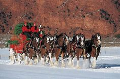 Bring the good times of the bar, tailgate or BBQ into your home with this Officially Licensed Budweiser canvas print. Whether its game day of having your friends and family over for a few laughs, this Big Horses, Pretty Horses, Horse Love, Beautiful Horses, Animals Beautiful, Work Horses, Christmas Tree Canvas Art, Xmas Tree, Clydesdale Horses Budweiser
