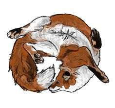 Illustration inspired by Juniper fox, a cute red fox curled up - by Alida Loubser (Artwork medium: Digital painting in Adobe Photoshop, Wacom Intuos tablet) Wacom Intuos, Children's Book Illustration, Drawing People, Cool Eyes, Vector Art, Concept Art, Moose Art, Character Design, Logo Design
