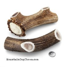 Large Whole Elk Antler Dog Chew