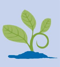 Quality Initiatives - Raising the Bar Social Services, Human Services, Raising, Plant Leaves, Bar, Business, Store