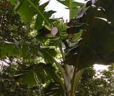 Costa Rica, Plant Leaves, Plants, Plant, Planets