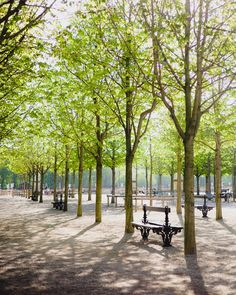 Luminous Luxembourg Gardens   Paris