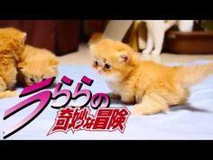【替え歌】ジョジョのSTAND PROUD歌ってみた【マンチカンズ】~JOJO with cats 4~ - YouTube