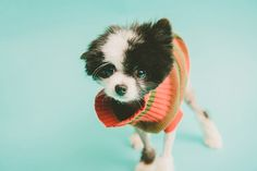 Photo Gallery: Adorable Adoptees Try Out Baby Blue Seamless Paper! Animal Photography, Amazing Photography, Pet Photographer, Pet Portraits, Baby Blue, Photo Galleries, Photoshoot, Pets, Gallery
