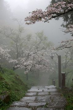 Foggy pathway...I love this picture!