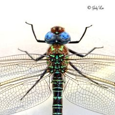 Dragonfly Photograph, Colorful Art, Nature, Macro, Insect Photography,... ($15) ❤ liked on Polyvore featuring home, home decor, wall art, integritytt, nature, photo wall art, aqua home decor, aqua home accessories, dragonfly home decor and dragonfly wall art