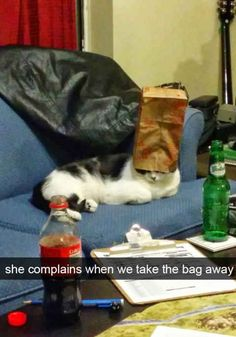 The 28 Funniest Cat Snapchats of All Time - BlazePress