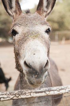 Donkey character