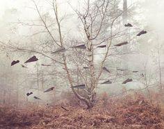 EntreLand Art et Anamorphoses, une sélection des créations vaporeuses et délicates deNicola Yeoman.               Images ©Nicola Yeoman