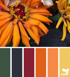 Gorgeous oranges and reds #colorpalette