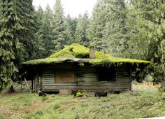 "Cabin ""Once a family getaway, this mossy roofed cabin is now abandoned. Near ZigZag, in NW Oregon.""""Once a family getaway, this mossy roofed cabin is now abandoned. Near ZigZag, in NW Oregon. Old Abandoned Buildings, Abandoned Places, Living Roofs, Cabins And Cottages, Log Cabins, Small Cabins, Rustic Cabins, Family Getaways, Small Buildings"