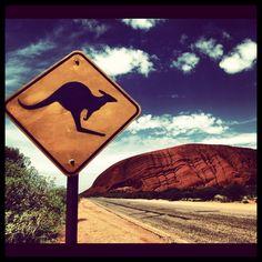 Kangaroo Crossing - Ayers Rock, Australia