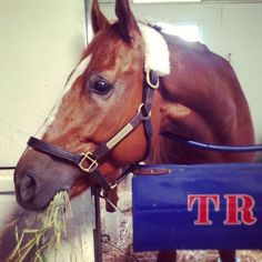 Wise Dan from Kentucky won the Breeders' Cup Mile!