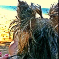 At the beach Gucci, Long Hair Styles, Beach, The Beach, Long Hairstyle, Beaches, Long Haircuts, Long Hair Cuts, Long Hairstyles