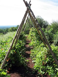 Plant supports - tomatoes, spaghetti squash, beans. Large wooden poles and wire between.
