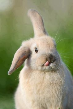 Awwww! THAT IS ADORABLE!!! What should we name it? #pet #rabbit #fluffy #animal