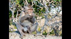 Stolen Fruit  #monkey #business #fruit