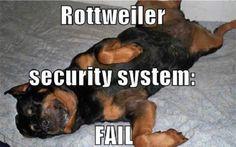 rottweiler sleeping meme